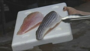 Seafood not always labelled correctly